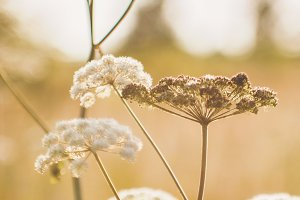 Golden hour summer field