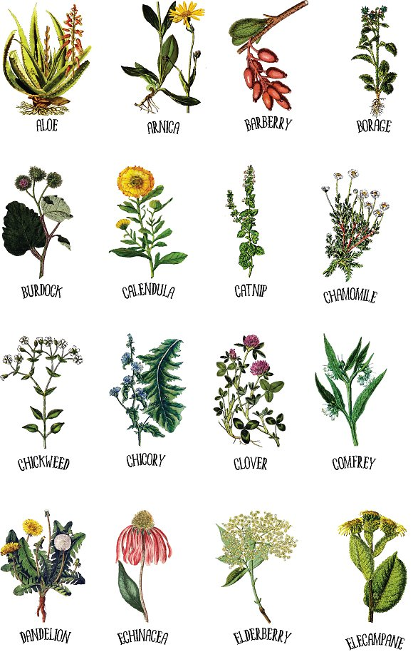 Medicinal Herb Collection 1