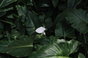 Lush green leaves with flower