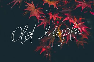 Old Maple