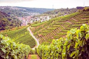 Vineyard Landscape In Germany