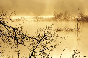 foggy swamp  with trees at sunrise