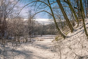winter Lake / tree