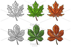 Maple leaf for LOGO. Color/mono
