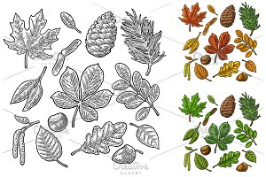 Set green leaf, acorn, chestnut and seed. Vector vintage color engraved illustration.