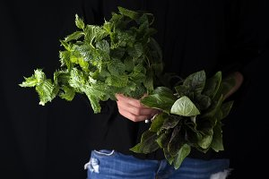 Female hands are collected in a bunch of fresh mint