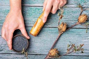 datura plant in folk medicine