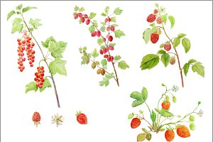 Watercolor Soft Fruit Branch