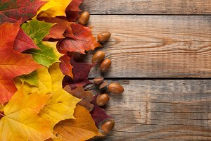 Colorful autumn leaves on the background a dark old wood. Top view with copy space