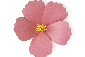 Paper craft flower collection (PNG)