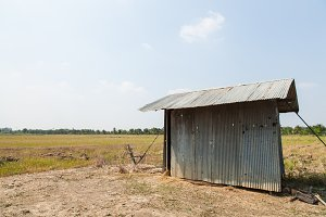Small cottages along the rice fields