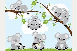 50% OFF - Koala Bears