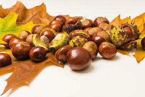 Chestnuts on a leaves