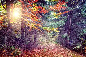 Majestic colorful forest