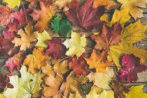 Flat-lay fallen maple leaves