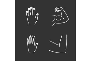 Human body parts chalk icons set