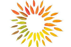 Autumn leaves Flat lay Pattern