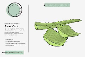 Aloe Vera Custom Illustration