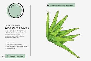 Aloe Vera Leaves Custom Illustration