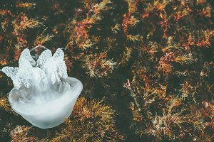 Jellyfish sea underwater