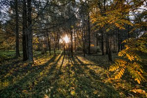 long shadows of trees