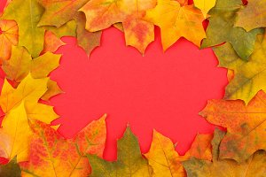 Colored maple leaves on the red background