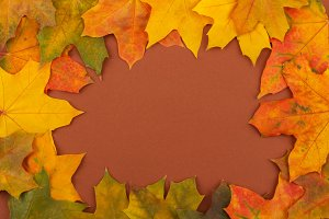 Colored maple leaves on the brown background