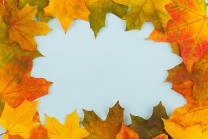 Colored maple leaves on the light blue background