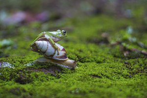 snail and dumpy frog