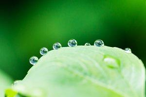 Dew on green leaf