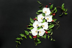 Composition of white orchids