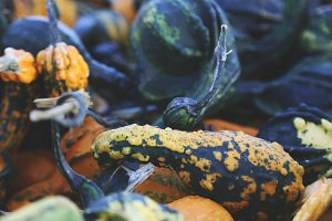 Autumn Gourds 2
