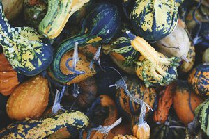 Autumn Gourds 3