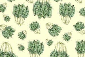 Hand drawn watercolor of vegetable