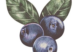 Hand drawn vintage of fruits (PNG)