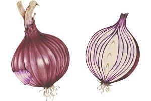 Hand drawn vintage vegetable (PNG)