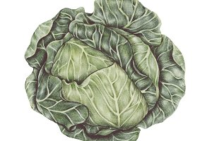 Hand drawn vintage vegetable (PNG)