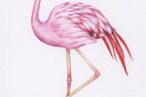 Hand drawn watercolor of animal