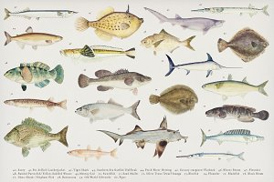 Colorful Southern Pacific fishes