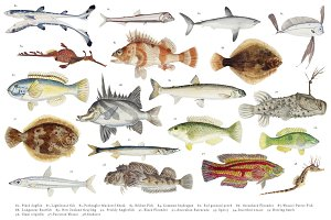 Southern Pacific fishes (PNG)