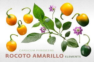 Rocoto Amarillo elements