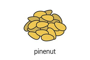 Pinenut color icon