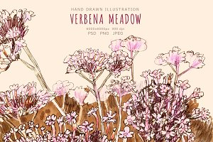 Verbena meadow. Floral illustration