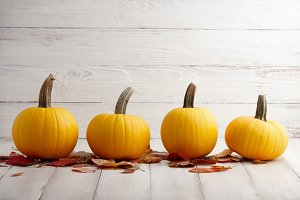 Yellow pumpkins on white planks