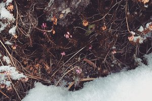 Snow, wood and flowers