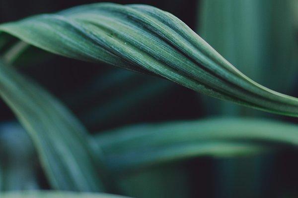 Abstract Stock Photos: René Jordaan Photography - Curvy Leaf