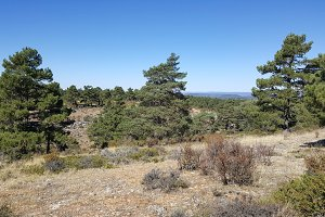 In the natural park of the high Tajo