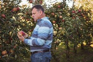 Farmer looking at apple