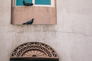 Two Pigeons Chilling on Ledge