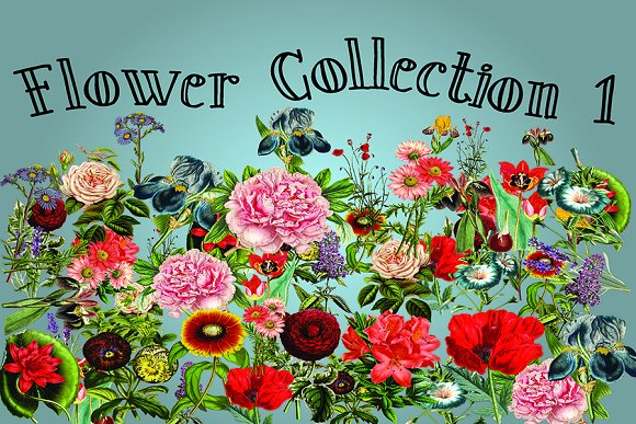 Flower Collection 1